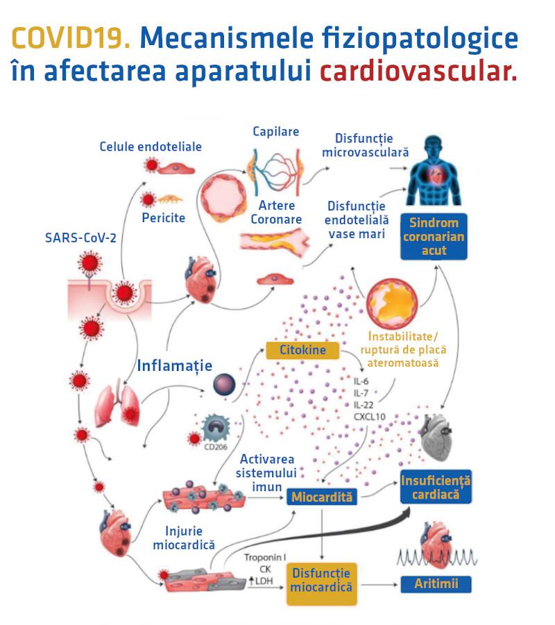 COVID19 în România: 51% dintre decesele raportate sunt asociate cu cel puțin o afecțiune cardiovasculară