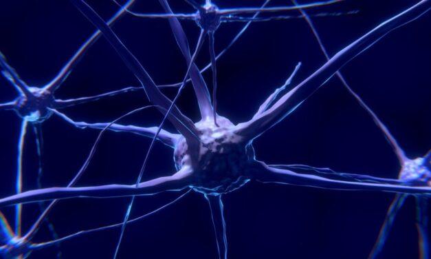 Studiu: Modul în care sistemul nervos enteric poate influența tulburările intestinale