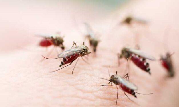 A fost înregistrat primul deces din acest an în România provocat de virusul West Nile